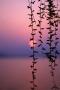Sunset Vines & Lake IPhone Wallpaper Free Mobile Wallpapers