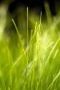 Fresh Green Grass Iphone Wallpaper wallpapers