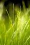 Fresh Green Grass Iphone Wallpaper wallpapers