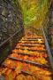 Autumn Fall In Bridge IPhone Wallpaper wallpapers