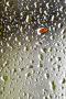 3D Green Water Drops IPhone Wallpaper wallpapers