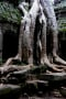 Tree Roots Awesome IPhone Wallpaper wallpapers