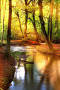 Forest & River Nature IPhone Wallpaper wallpapers