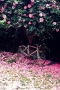Pink Camellia And Bike IPhone Wallpaper wallpapers