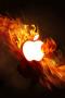 Fire Apple Cute IPhone Wallpaper wallpapers