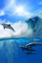 Surfing Dolphins IPhone Wallpaper wallpapers