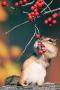 Little Mice Eats Berry IPhone Wallpaper wallpapers