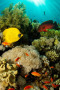 Aquarium Coral Reef Fish IPhone Wallpaper wallpapers