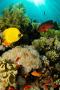 Aquarium Coral Reef Fish IPhone Wallpaper wallpapers