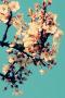 Cyan Sky Blossom IPhone Wallpaper wallpapers