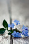 Blue Flowers On Road IPhone Wallpaper wallpapers