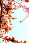 Cherry Blossoms Tree Garden IPhone Wallpaper wallpapers