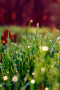 Green Grass Dew Drops IPhone Wallpaper wallpapers
