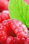 Fresh Raspberry Green Leaf IPhone Wallpaper wallpapers