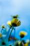 Natural Sunflower IPhone Wallpaper wallpapers