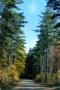 Autumn Nature Road Jungle IPhone Wallpaper wallpapers