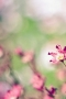 Lovely Pink Natural Flowers IPhone Wallpaper wallpapers