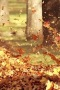 Lovely Autumn Golden Leaves Flying IPhone Wallpapers wallpapers