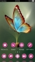 Butterfly 3D Color Android Theme themes