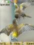 Two Birds Theme Free Mobile Themes