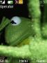 Kermit Frog themes