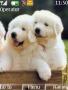 White Pups themes