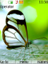 Butterly themes