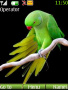 Parrot themes