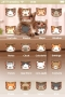 Cute Face Cats Free IPhone Theme themes