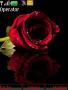 Red Rose Nokia S40 Theme themes
