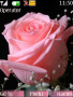 Pink Rose Free Mobile Themes