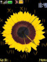 Sunflower Clock themes
