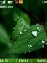 Dew On Leaf Theme themes