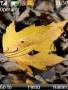 Autumn Leaf Nokia Theme themes