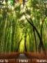 Bamboo Nokia Theme Free Mobile Themes