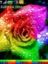 Rainbow Flower Theme Free Mobile Themes