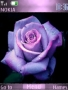 Violet Rose Nature Nokia Theme Free Mobile Themes