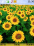 Sunflower Nokia Theme Free Mobile Themes