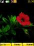 Flowers Theme themes