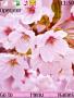 Spring Theme themes