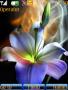 Flower Beauty Theme themes