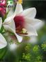 Nice Flower Theme themes