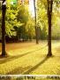 Autumn Scene Theme Free Mobile Themes