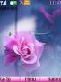 Pink Rose Nokia Theme themes