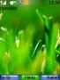 Green Theme themes