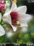 Nice Flower themes