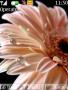 Petals themes