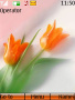 Tulips themes