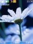 Beauty Flower themes