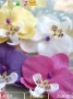 Attractive Flowers themes